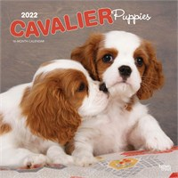 Cavalier King Charles Puppies 2017 Calendar