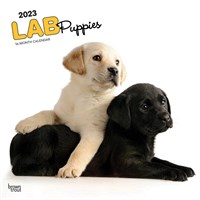 2012 Black Labrador Retriever Puppies Calendar