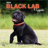 2012 Black Lab Puppies Calendar