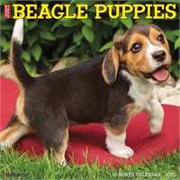 2012 Beagle Puppies Calendar Best Price