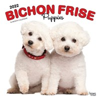 2012 Bichon Frise Puppies Calendar Best Price