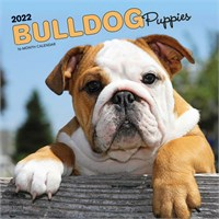 Bulldog Puppies Calendar 2017