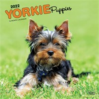 2012 Yorkshire Terrier Puppies Calendar