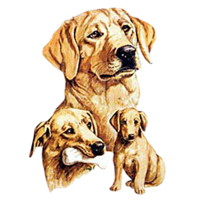 Yellow Lab T-Shirt - Best Friends
