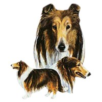 Collie Shirts