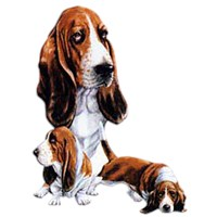 2186 Basset Hound Shirts