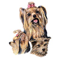 2191 Yorkshire Terrier Shirts