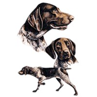 German Shorthaired Pointer Shirts