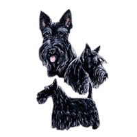 2213 Scottish Terrier Shirts