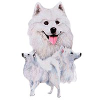 Samoyed Shirts