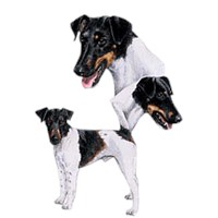 Smooth Fox Terrier Shirts