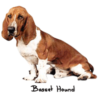 Basset Hound T-Shirt - A Tuck Here and There