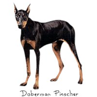 Doberman Shirts