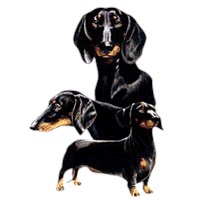 Black Dachshund Shirts