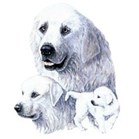 Great Pyrenees Shirts
