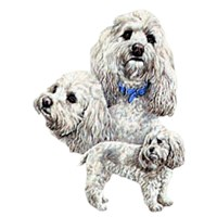 Cockapoo Shirts