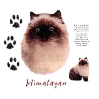 Himalayan Cat Shirts