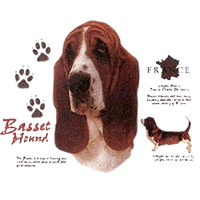 Basset Hound T-Shirt - History Collection