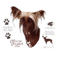 Chinese Crested Shirts