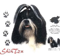 Shih Tzu T-Shirt - History Collection