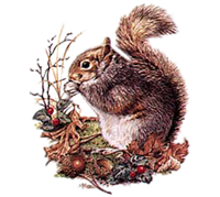 Squirrel T-Shirt - Detailed