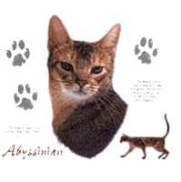 Abyssinian Cat Shirts