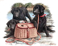 Black Lab T-Shirt Playful Puppies