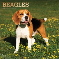 2012 Beagles Calendar Best Price