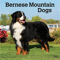 2012 Bernese Mountain Dogs Calendar Best Price