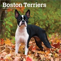 2012 Boston Terriers Calendar