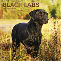 2012 Black Labrador Retrievers Calendar