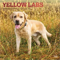 2012 Yellow Labrador Retrievers Calendar