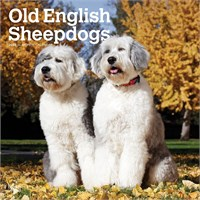 2012 Old English Sheepdogs Calendar