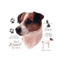 Smooth Hair Jack Russell Shirts