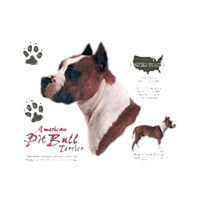 American Pit Bull Terrier History Collection T-Shirt