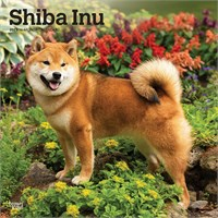 2012 Shiba Inu Calendar Best Price