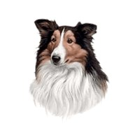 5071 Shirts: Collie