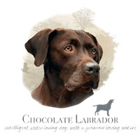 Chocolate Lab Shirts