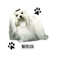 Maltese T-Shirt - Profiles