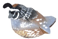 Quail Plush Best Price