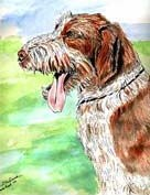 Spinone Italiano Flag