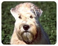 Wheaten Terrier Coasters