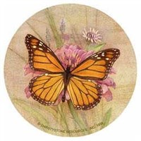 Butterfly Coasters - Nature (Set of 4)