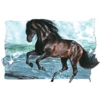 Thoroughbred Horse T-Shirts
