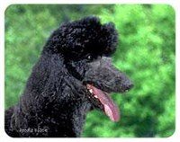 Black Poodle Coasters