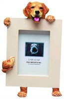 Golden Retriever Picture Frame