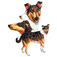 Smooth Hair Collie Shirts