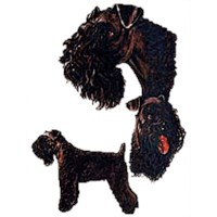 Kerry Blue Terrier Shirts