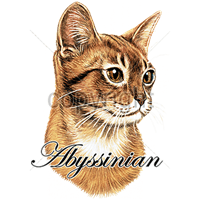 Image of Abyssinian Cat T Shirt True To Life