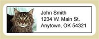 Maine Coon Cat Address Labels Best Price